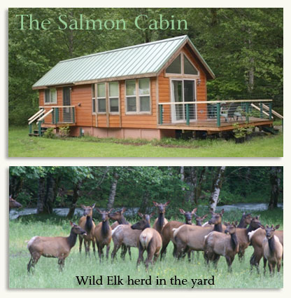 Private Salmon Cabin along the Dosewallips River