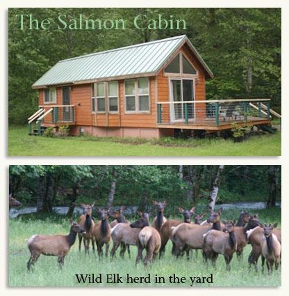Private Salmon Cabin along the Dosewallips River